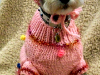 Chloe M the dog in her sweater